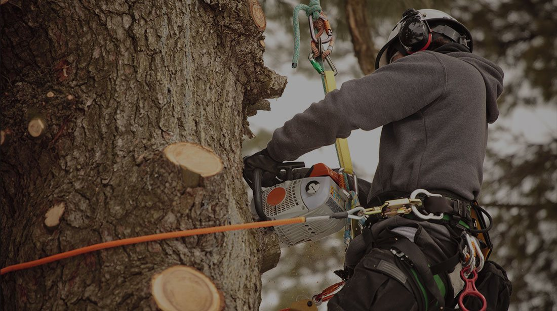 Clear View Tree Service: Tree removal and Stump grinding North Bend, Issaquah and Bellevue