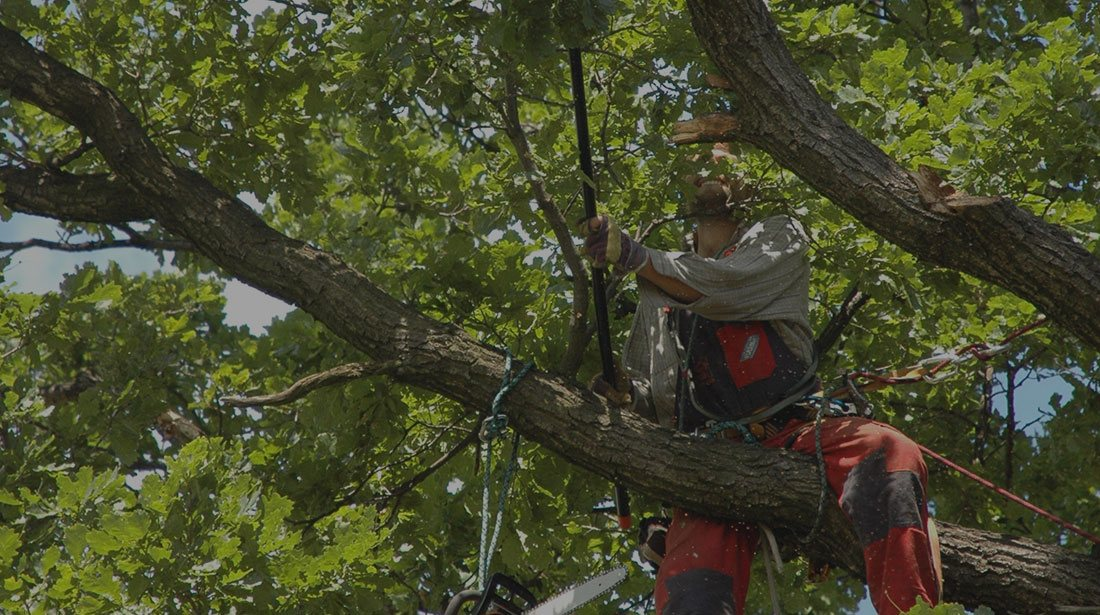 Clear View Tree Service: Tree cabling and bracing in North Bend, Issaquah and Bellevue